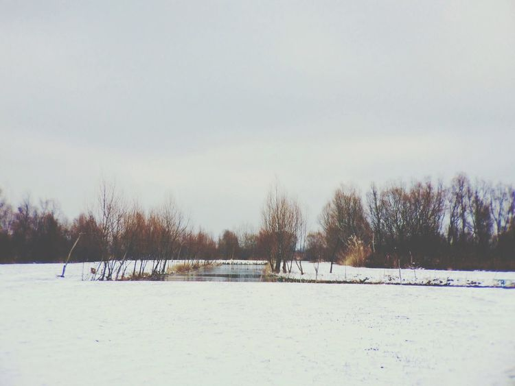 Nature Landscape Vilkovo Tree Snow Winter