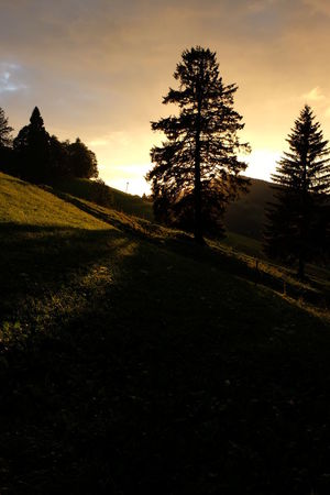 Black Forest Germany Evening Lights Landscape_Collection Schwarzwald Silhouettes Trees Beauty In Nature Conifer  Evening Landscape Mountains Nature Outdoors Spruce Trees Sunset Tranquility Tree