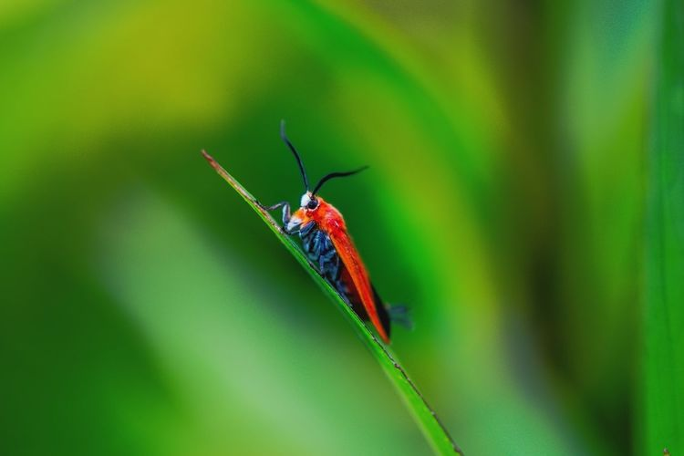 Invertebrate Animal Themes One Animal Animal Wildlife Animals In The Wild Animal Insect Green Color Plant Part Leaf Zoology Nature