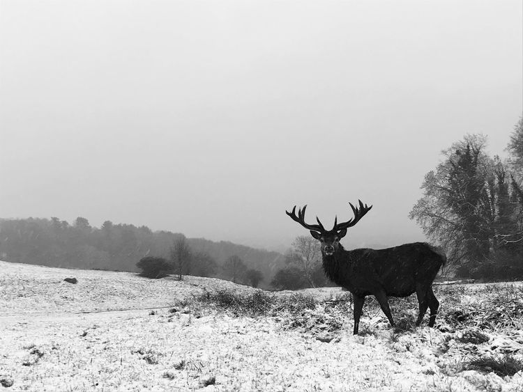 Bristol, England Deer Snow No People Mammal