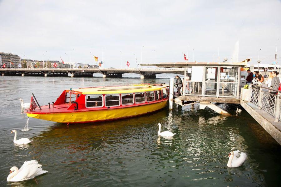 River Boat Swans Geneva Switzerland
