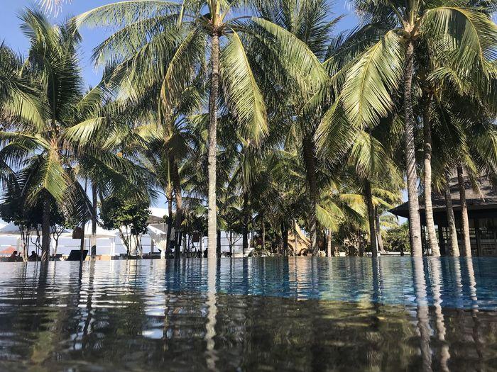 Poolside Pool