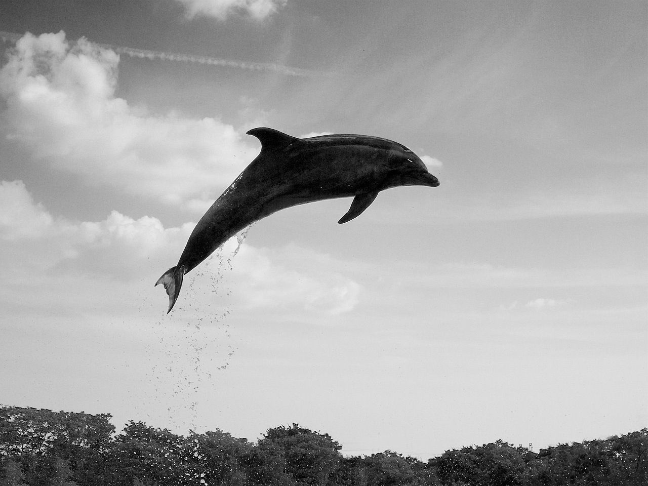 Side-view of dolphin in air