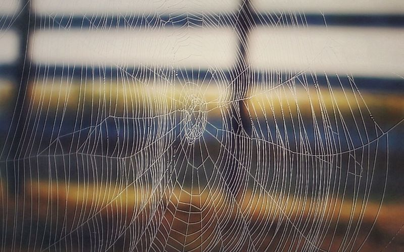 Fascinating Art Is Everywhere Taking Photos Close-up Walking Around Morning Architecture Spider Web Spinning Weaving Close-up Nature No People Focus On Foreground Silk Outdoors