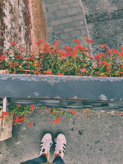 Romania Europe Sibiu Travel Bridge Flowers Fall Adidas October Architecture Low Section One Person Human Leg Real People Personal Perspective Standing Water Outdoors Shoe Lifestyles Women Day Human Body Part