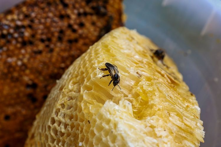 EyeEm Best Shots EyeemPhilippines EyeEm Eyeemphotography Colors Yellow Insect Close-up Bee Honeycomb Buzzing Honey Honey Bee Bumblebee Colony Hexagon Beehive
