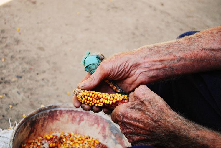 Close-up of man holding corn