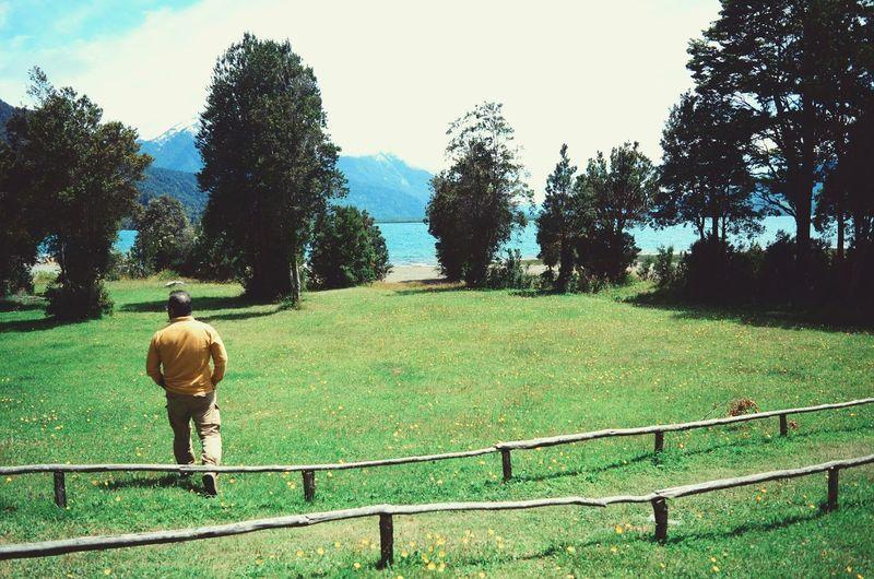 Rear view of man walking in park