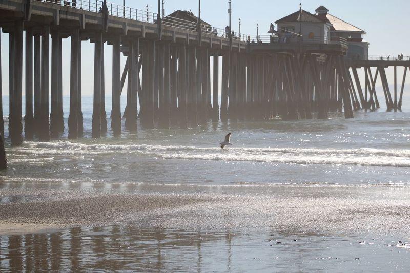 Bird flying over sea against pier
