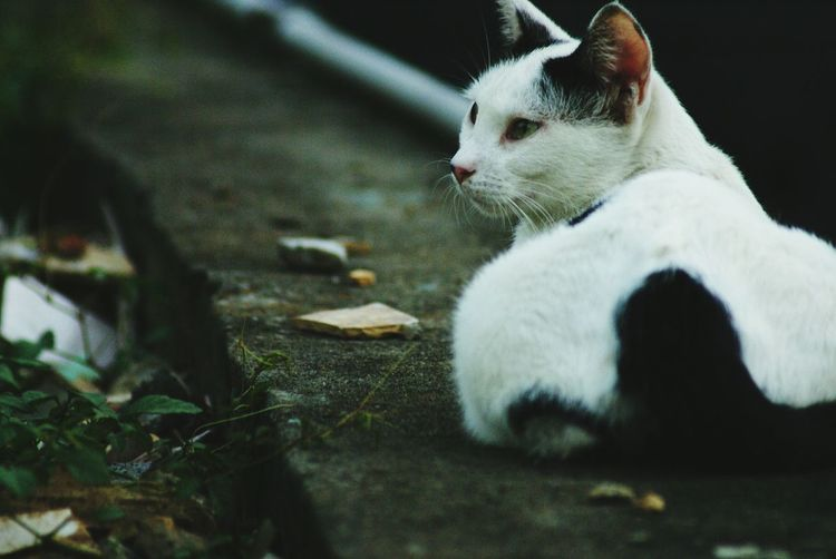 Cat Cat Watching Looking Into The Future Street Cat Cat Lovers Animal Alley Cat 街貓 貓 Katze Always Be Cozy Pet Portraits