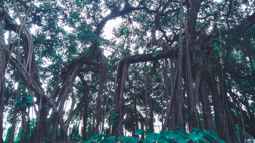 Gettyimages EyeEm Selects EyeEm Best Shots EyeEm Nature Lover Tree Branch Full Frame Forest Backgrounds Sky Green Color