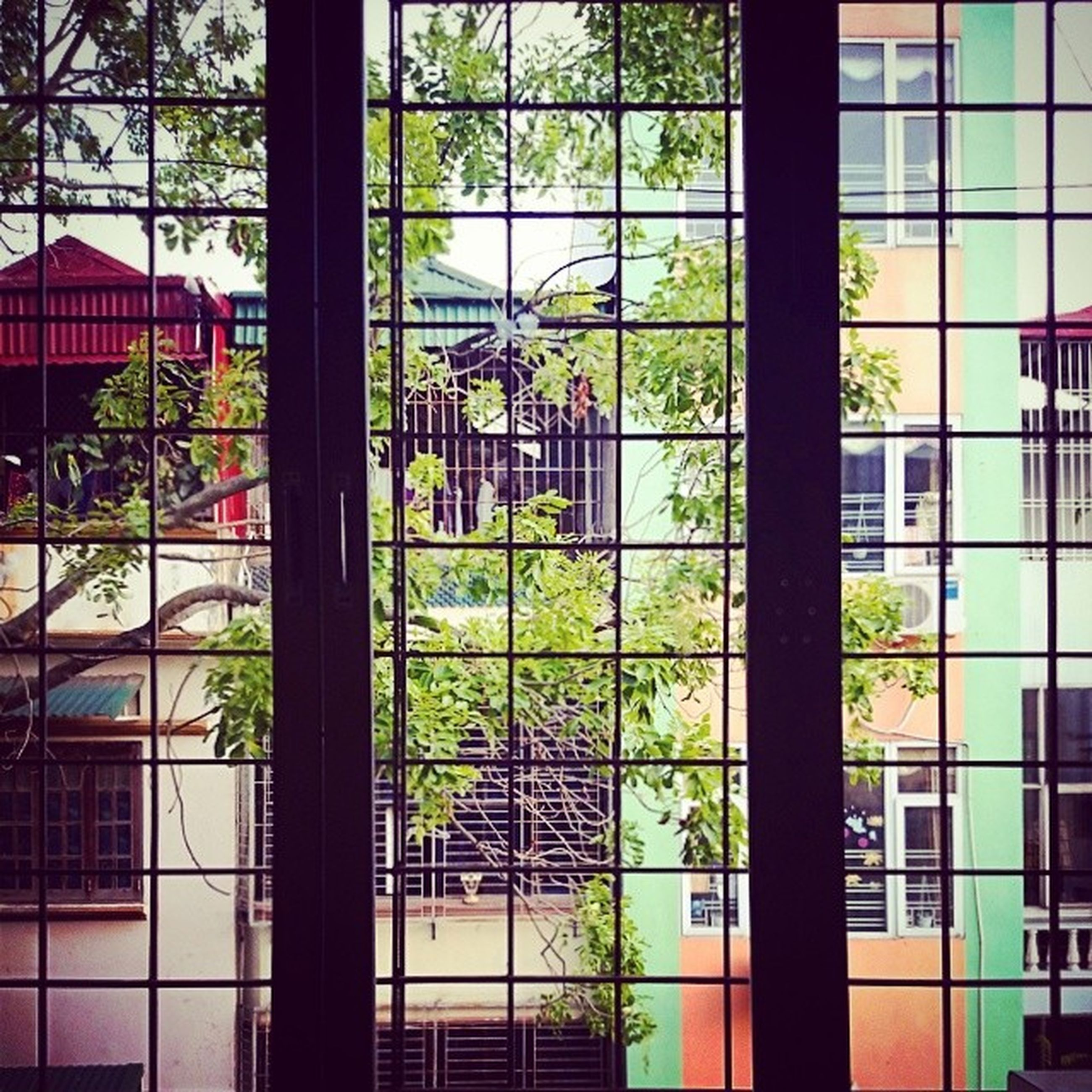 window, glass - material, architecture, built structure, indoors, building exterior, transparent, tree, plant, potted plant, glass, growth, window sill, house, reflection, building, day, closed, art, no people