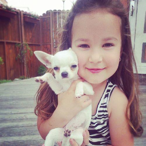 Beautiful , Beauty , Mia , Chiuaua , instalike, eyes, beaurifuleyes, dog