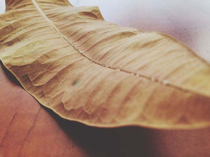 Indoors  Close-up Still Life Freshness No People Dramatic Angles Nature Leaf