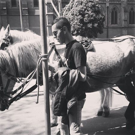 5 Days in Melbourne Selfie Horse Citystreets Beautifulcreature Black &Whites Gayguy Gaygram Instagay Gayboy Gay Dayout