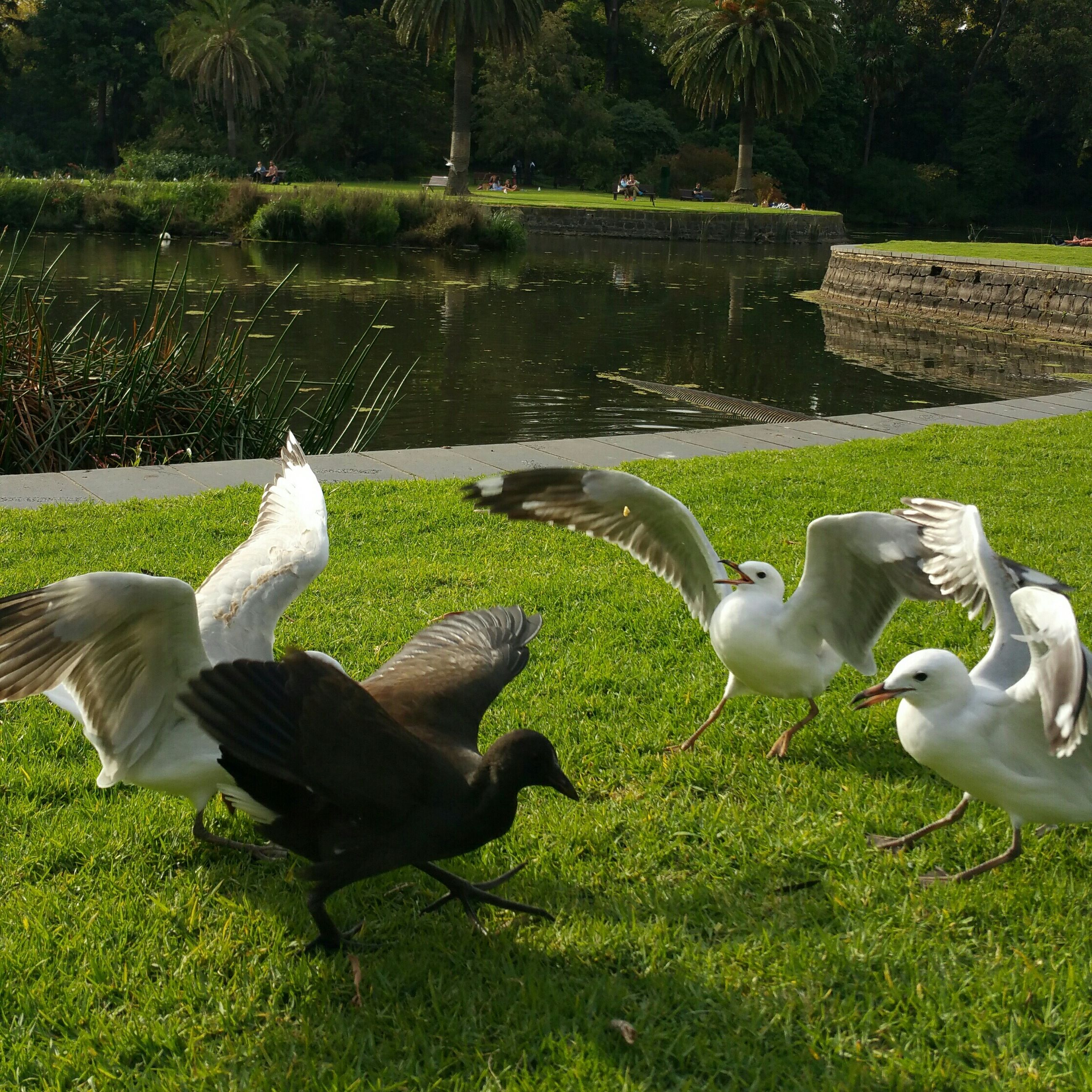 grass, bird, animal themes, animals in the wild, wildlife, park - man made space, statue, green color, sculpture, grassy, swan, lawn, animal representation, field, duck, tree, nature, human representation, sunlight, day