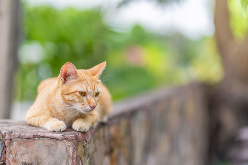 Portrait of a cat sitting on retaining wall