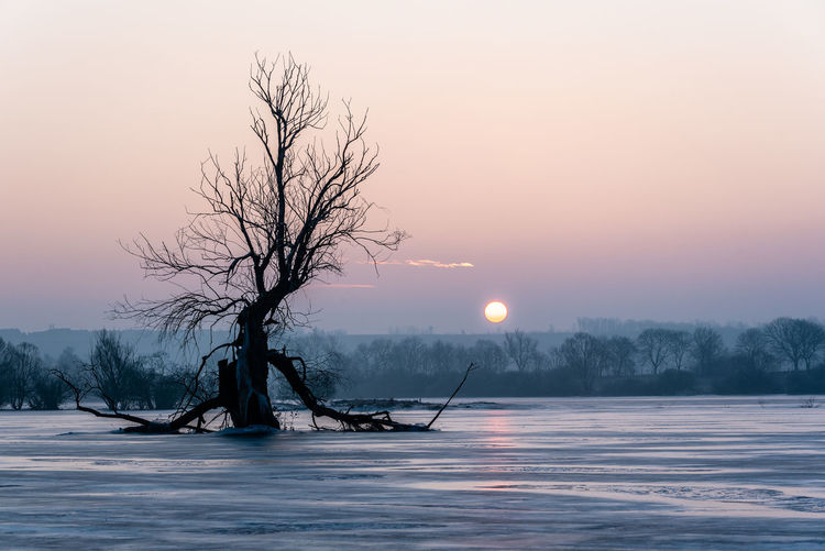 Silhouette bare tree by frozen lake against sky during sunset