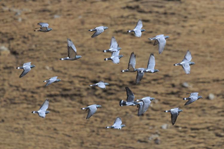 Flock of birds flying above landscape