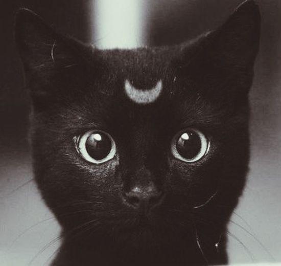 Missy moon.. Nyah. ????⭐️ Cutie Kitten Moon Sailor Moon
