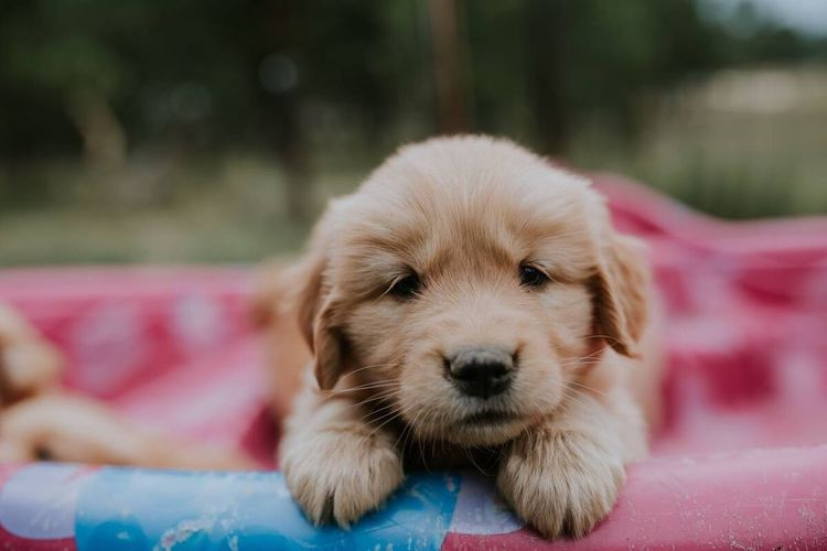 Portrait of cute puppy relaxing outdoors