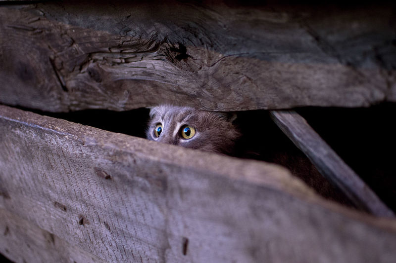 Close-up of cat hiding behind