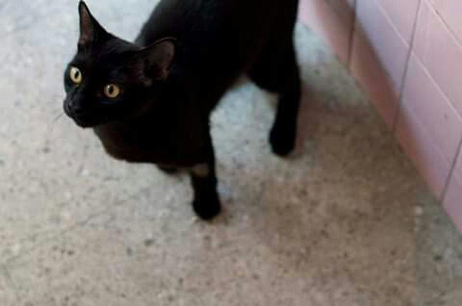 Buscando comida. Gato Cat Nikon