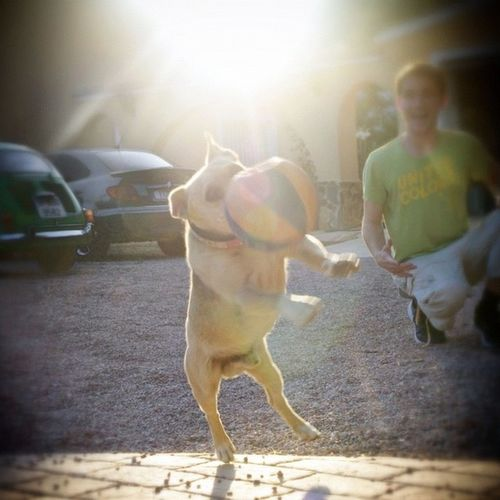 Air bud Sun Happy Playing Shiny Shine Photooftheday Instagrameando Canariasviva Hot_shotz Dogoftheday Dogsofinstagram Insta_pick Cineescena