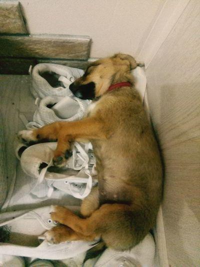 dog sleep Pets