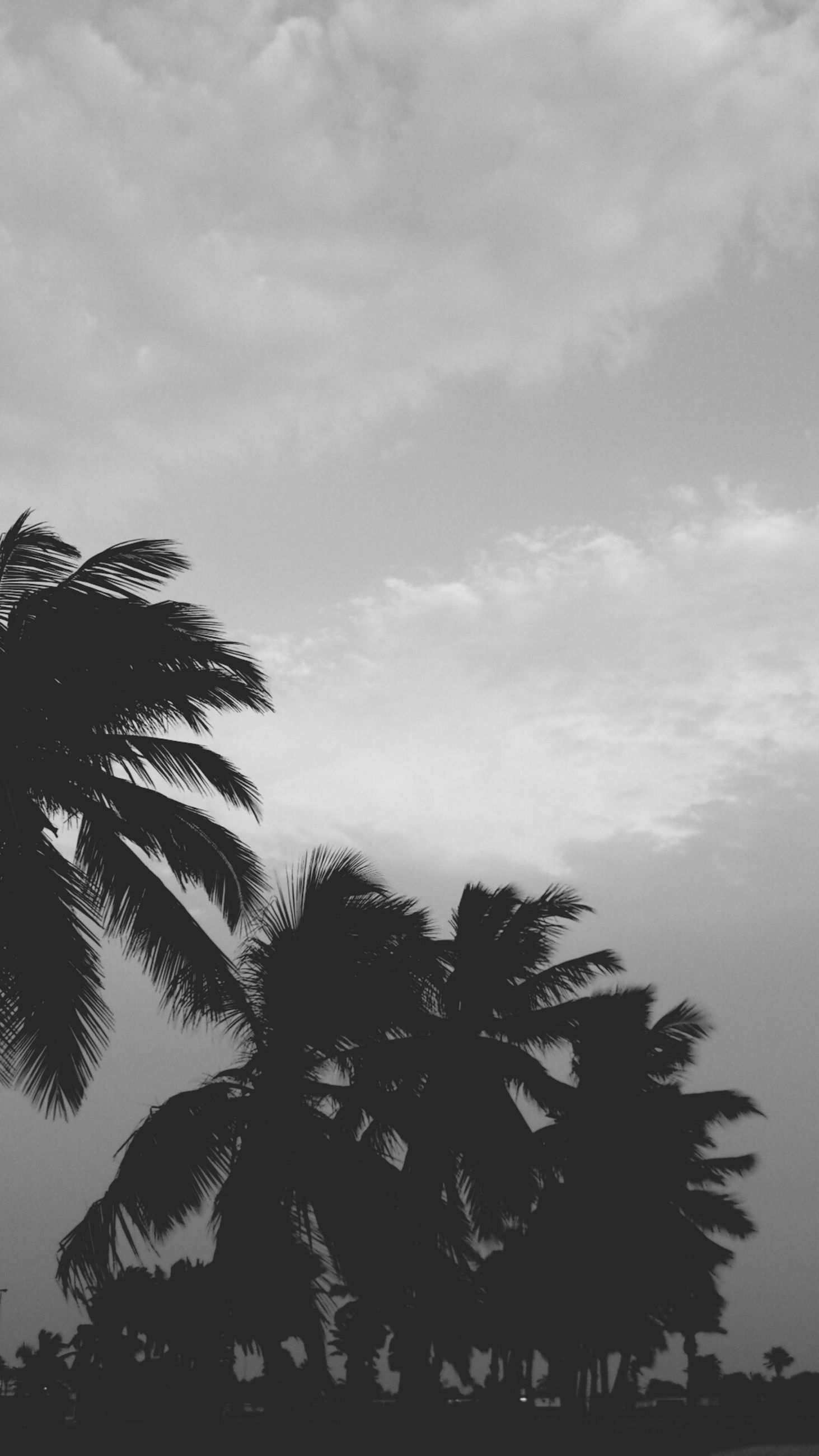 palm tree, tree, sky, low angle view, silhouette, cloud - sky, growth, tranquility, nature, beauty in nature, cloudy, cloud, scenics, tranquil scene, branch, outdoors, no people, day, tree trunk, coconut palm tree