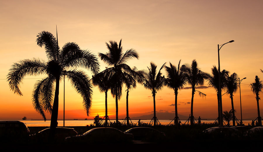 Orange sunset in Manila bay, Philippines Sky Sunset Palm Tree Tropical Climate Tree Silhouette Plant Beauty In Nature Scenics - Nature Nature Orange Color Water Tranquility Tranquil Scene Growth Beach Land Sea Outdoors Coconut Palm Tree Tropical Tree Orange Sunset Philippines Manila Bay  Palm Tree Exotic Lifestyles