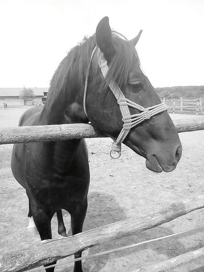 Horse Besutiful Eye