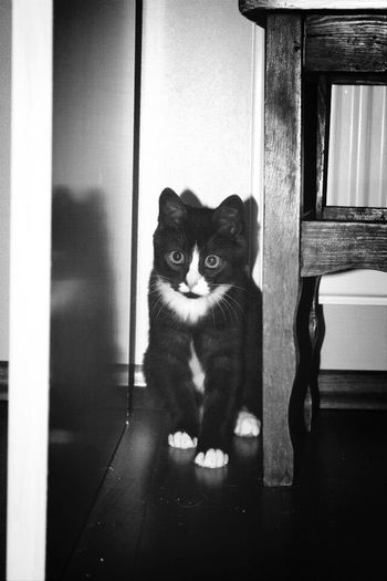Cat Litlle Babycat Beutiful  Cute