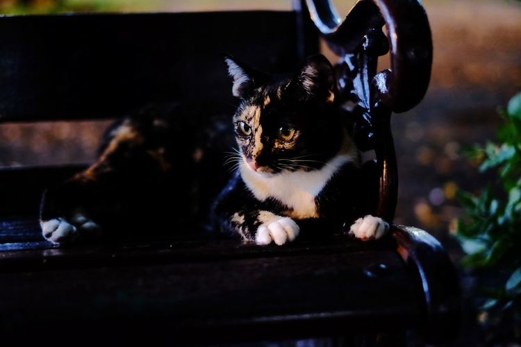 Meaw Meaw One Animal Mammal Domestic Animals Animal Themes Pets Portrait Feline Outdoors Black Color Animal Domestic Cat Beauty Indoors  Close-up People Day Black Cat Black Cat Photography Nature No People