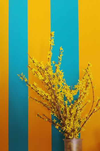 Close-up of yellow flower tree against clear sky