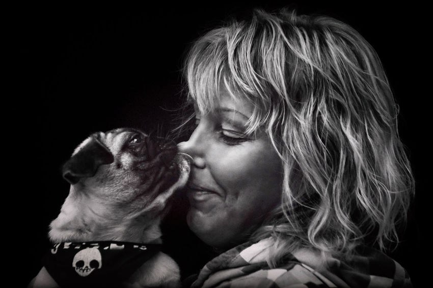 Pug dog puppy licks the nose of a blond woman 30 Years Old Kiss Lick Love Pug Woman Affection Animal Animal Language Blond Hair Dog Dog Mum Embrace Face Friendship Human I Love You Kiss Laugh Leak Nose Portrait Puppy Smack Wet