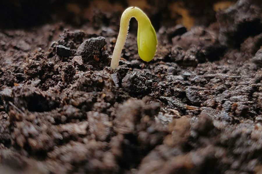 An incipient life Plant Plants Plant Life Vegetation Green Green Color Land Newlifenewflowers Newlife Incipient Little Things Littlelife Browm Wet Little Planet Little Plants🌿 Background Backgrounds Sand Close-up In Bloom Growing Blooming Young Plant
