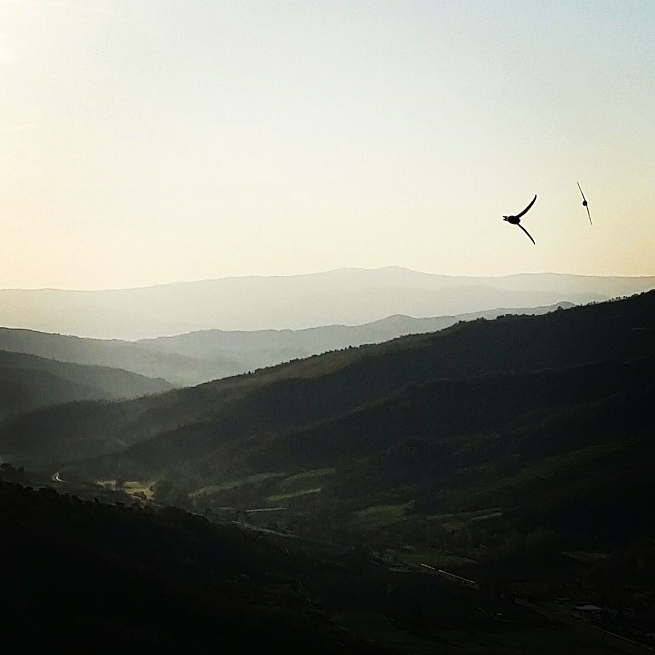 Two Birds Flying Over Mountains