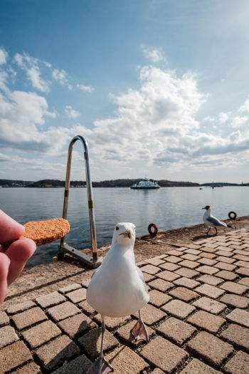 Human Hand Real People Hand One Person Sky Unrecognizable Person Cloud - Sky Human Body Part Food Day Water Bird Vertebrate Holding Sea Animal Wildlife Nature Finger Outdoors Horizon Over Water Seagull POV Norway
