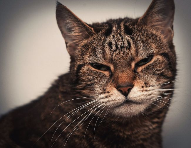 Katze Kitty