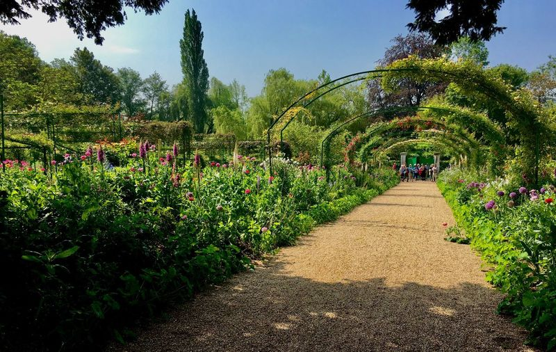 Tree Plant Growth Formal Garden Diminishing Perspective Shadow Footpath The Way Forward Arch Clear Sky Park - Man Made Space Flower Day Green Color Nature Outdoors Freshness Tranquil Scene Green Hedge Arch Fresh On Eyeem