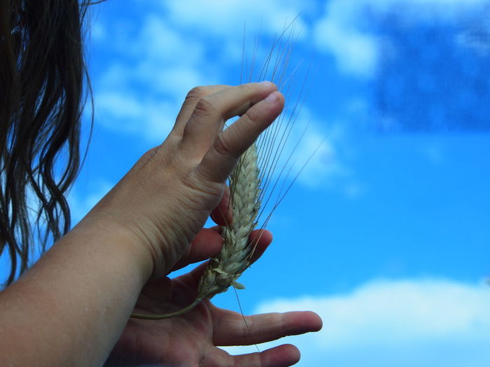 Eating Corn On The Cob  Lifestyle Loving Nature Blue Sky Child And Nature Child Hands Close-up Day Ecological Life Focus On Foreground Holding Holding Corn Crops Human Body Part Human Hand Lifestyles Nature One Person Outdoors People Real People Sky Summer Women