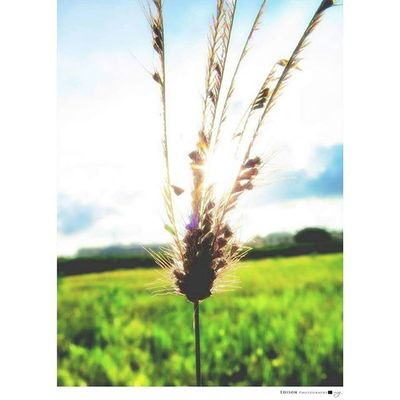 【 光芒 】 信心正在發光 每個角落都被照亮 讓這地美麗得像天堂 我們正在發光 蓄勢待發 載著夢想 世界今天開始不再一樣 這是愛的力量 正綻放光芒 Canong16 Light 365Snap Beautiful Sky