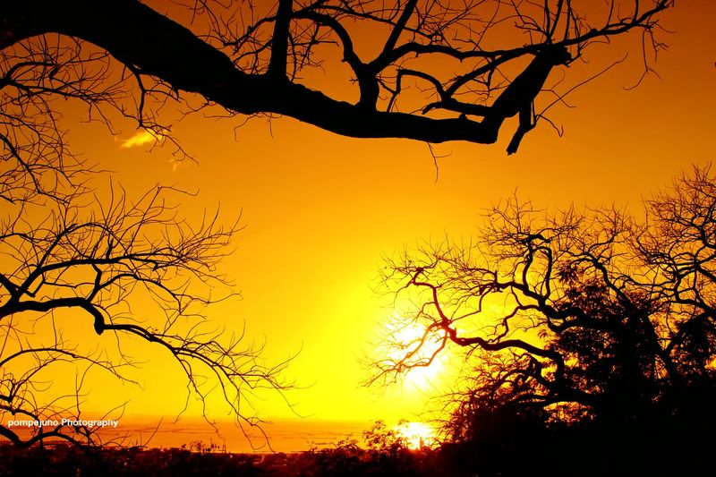Hugging A Tree Sunset Sunset Silhouettes Eye4photography  From My Point Of View Beautiful Sunset Exploring New Ground Hello World The Places I've Been Today Check This Out