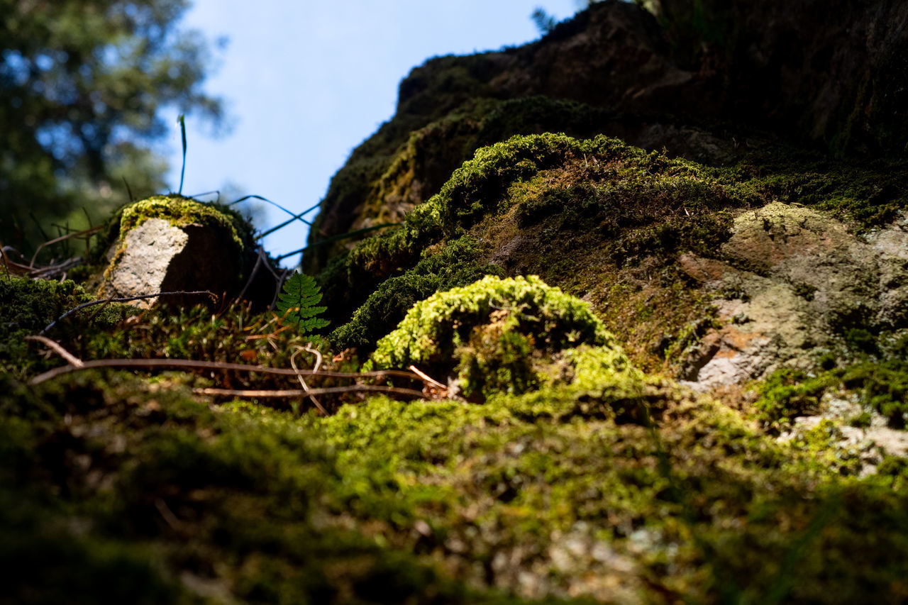 rock, selective focus, plant, solid, rock - object, nature, mountain, tree, no people, land, moss, growth, tranquility, beauty in nature, day, outdoors, sky, tranquil scene, forest, scenics - nature, surface level