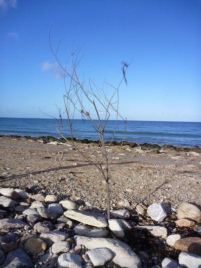 Nature Sculture Sea Sea Trees  Shore Stone Stone - Object Tree