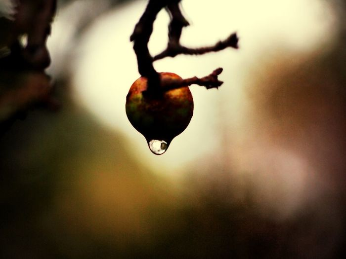 Nature Macro TheMinimals (less Edit Juxt Photography)