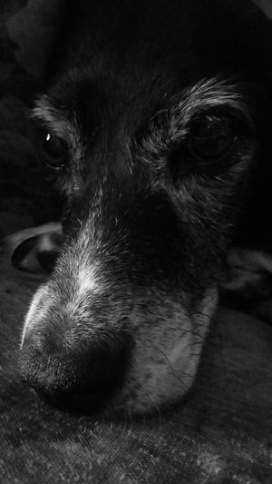 My puppy Tia, I think she ages quite beautifully. Dog Puppy Love Black And White Dog