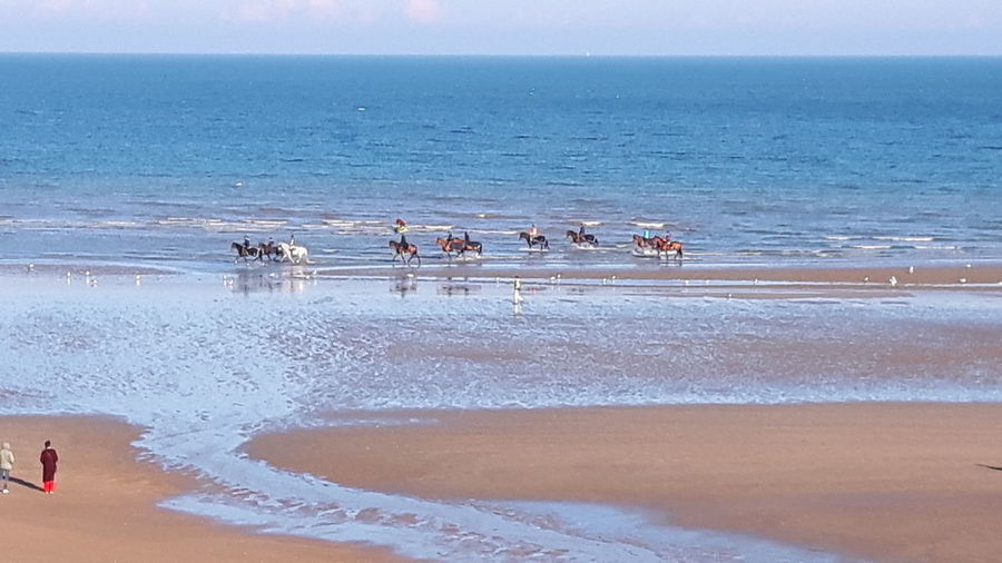 Beach Water Sea Sand Horizon Over Sea Horses On The Beach Cabourg  Calvados Normandie France Live For The Story