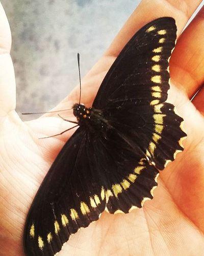 Una visita Mariposa Gigante Pega Todosarrancandelcalor Bonitodia Calormatapersonas